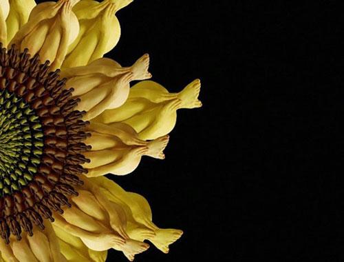 Human flowers by Cecelia Webber 8