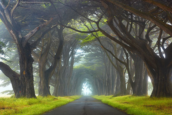 Point Reyes National Seashore, California Nature Photography