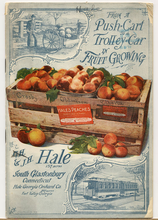 J.H.Hale Fruit Catalog Vintage Typography Design