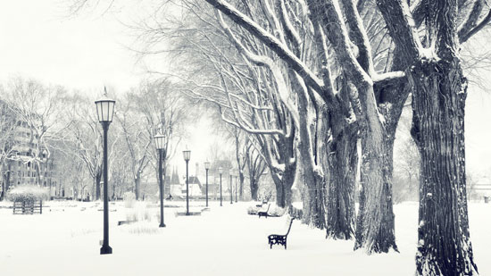 Winter trees Photography Wallpaper