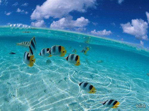 water wallpaper. fish in the water wallpaper
