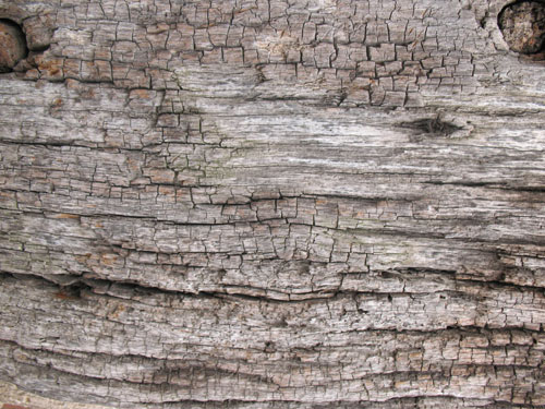 Old Wood texture 3 by =Tigg-stock