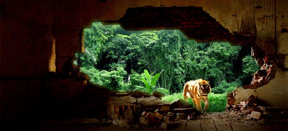 create-an-urban-tiger-photo-manipulation 91 Photoshop Photo Manipulation Tutorials: Become A Pro
