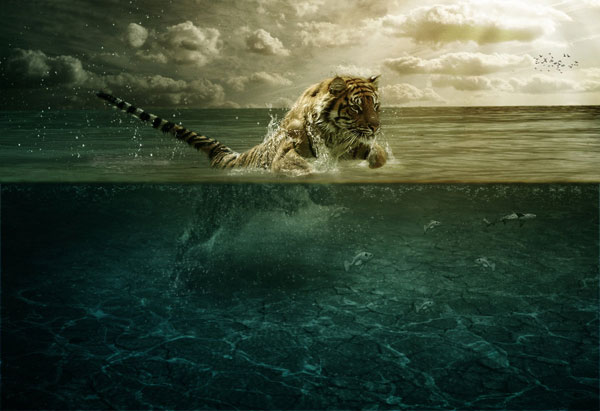 Tiger Leap in the Water Photoshop Design Inspiration