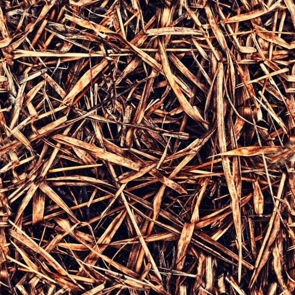 Dead Grass texture