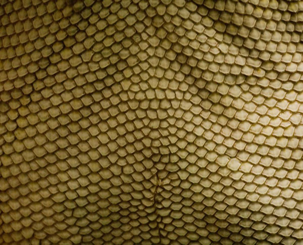 Scales texture