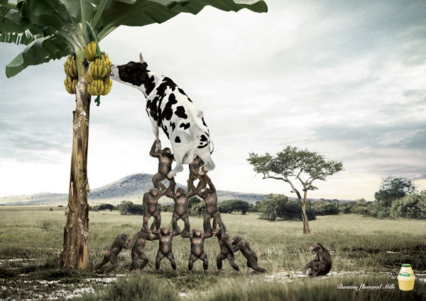 Banana flavored milk Print Advertisement