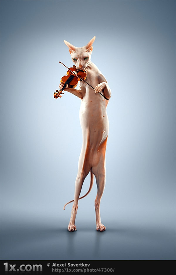 Just A Cat Playing The Violin Photo Manipulation