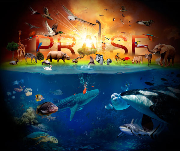 All Praise Graphic Design Inspiration