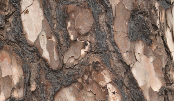 Wood bark texture Free for Download