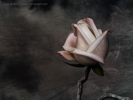 My heart the rose - wallpaper