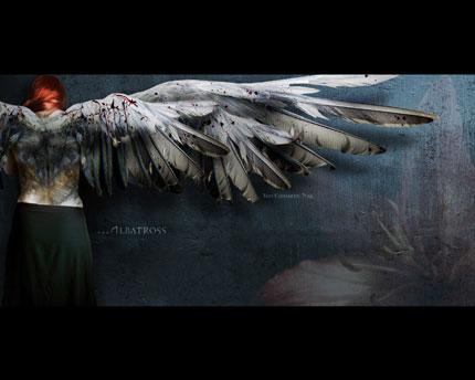 TCN Wallpaper - Albatross